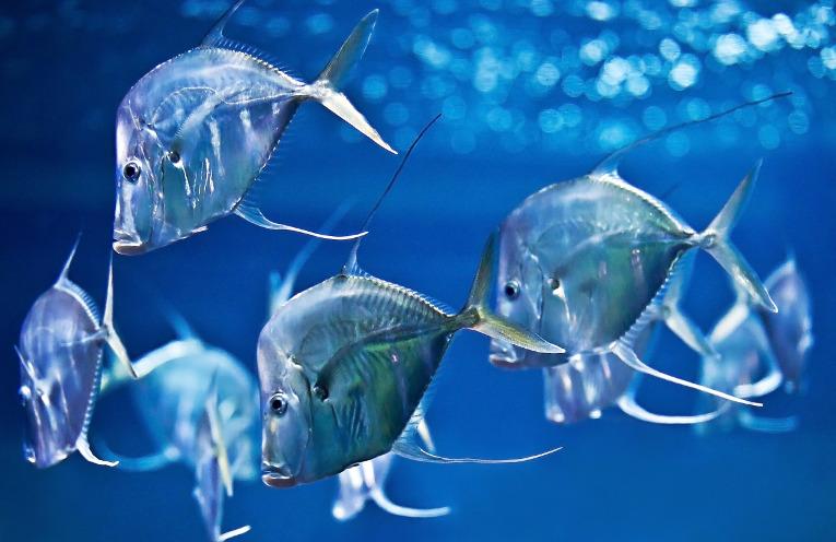 Bodenguckerfische im Aquarium Berlin - © Frederic Schweizer