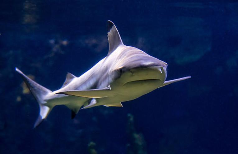 Taschenlampen Tour im Aquarium © Zoo Berlin